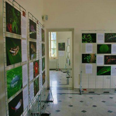 Giardini Storici di Villa Hanbury, Ventimiglia (IM), 2012