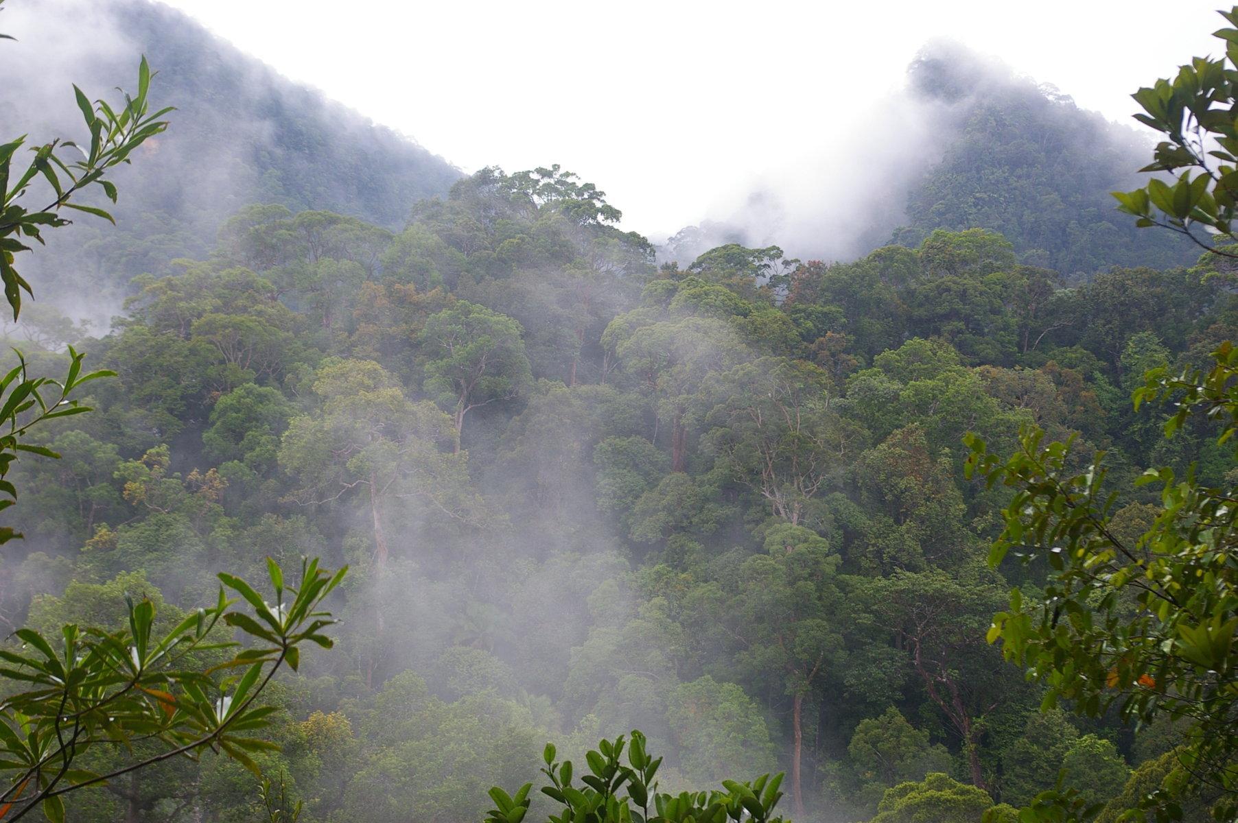 Antiche e straordinarie foreste, Sarawak